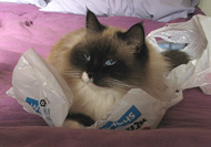 Even my human is not so cheap that she'd give us plastic bags