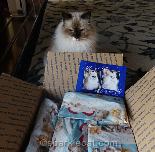 ragdoll cat looking at secret paws gifts