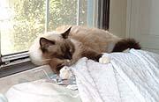As empty-headed sleeping as she is when awake.