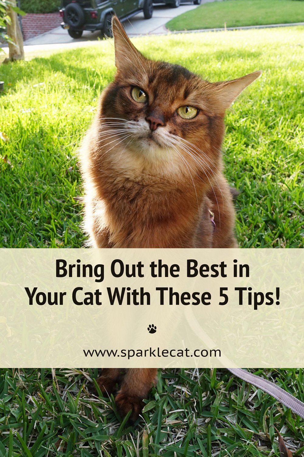 How to Bring Out the Best in Your Cat