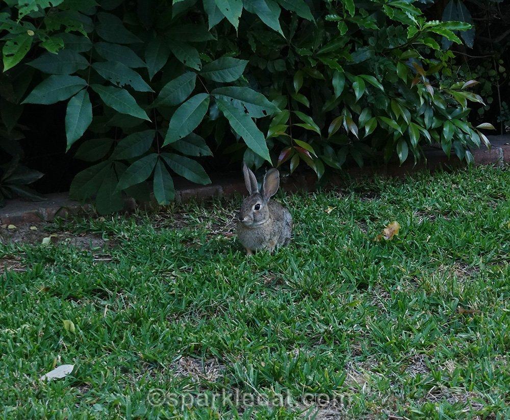 closer shot of bunny