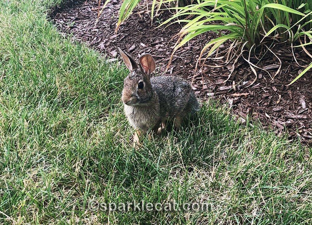 bunny rabbit on grass strip