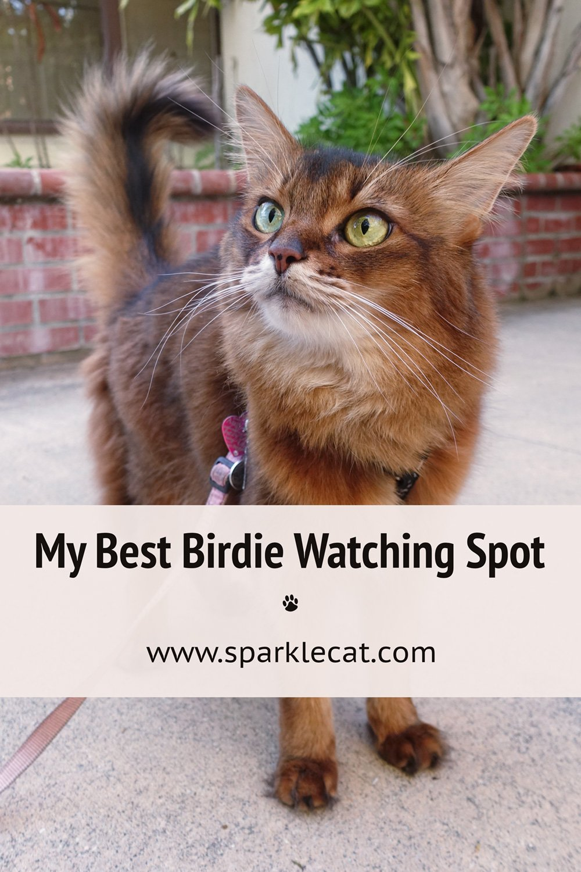 My New Birdie Watching Spot