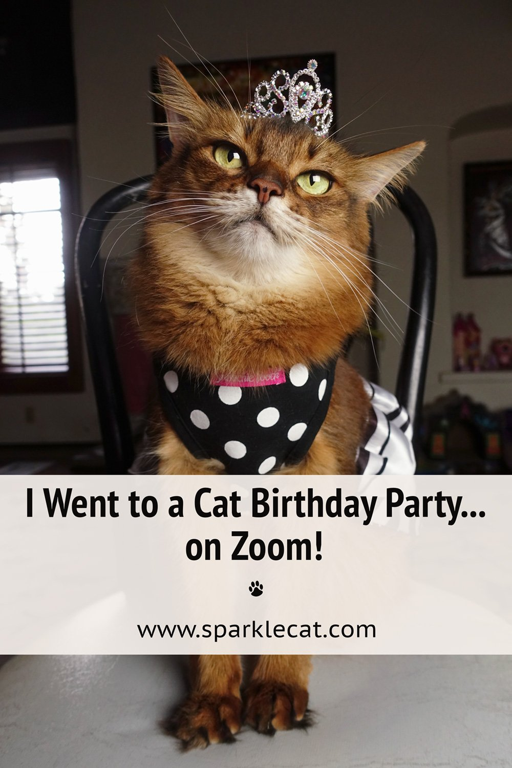 I Attended a Cat Birthday Party on Zoom!