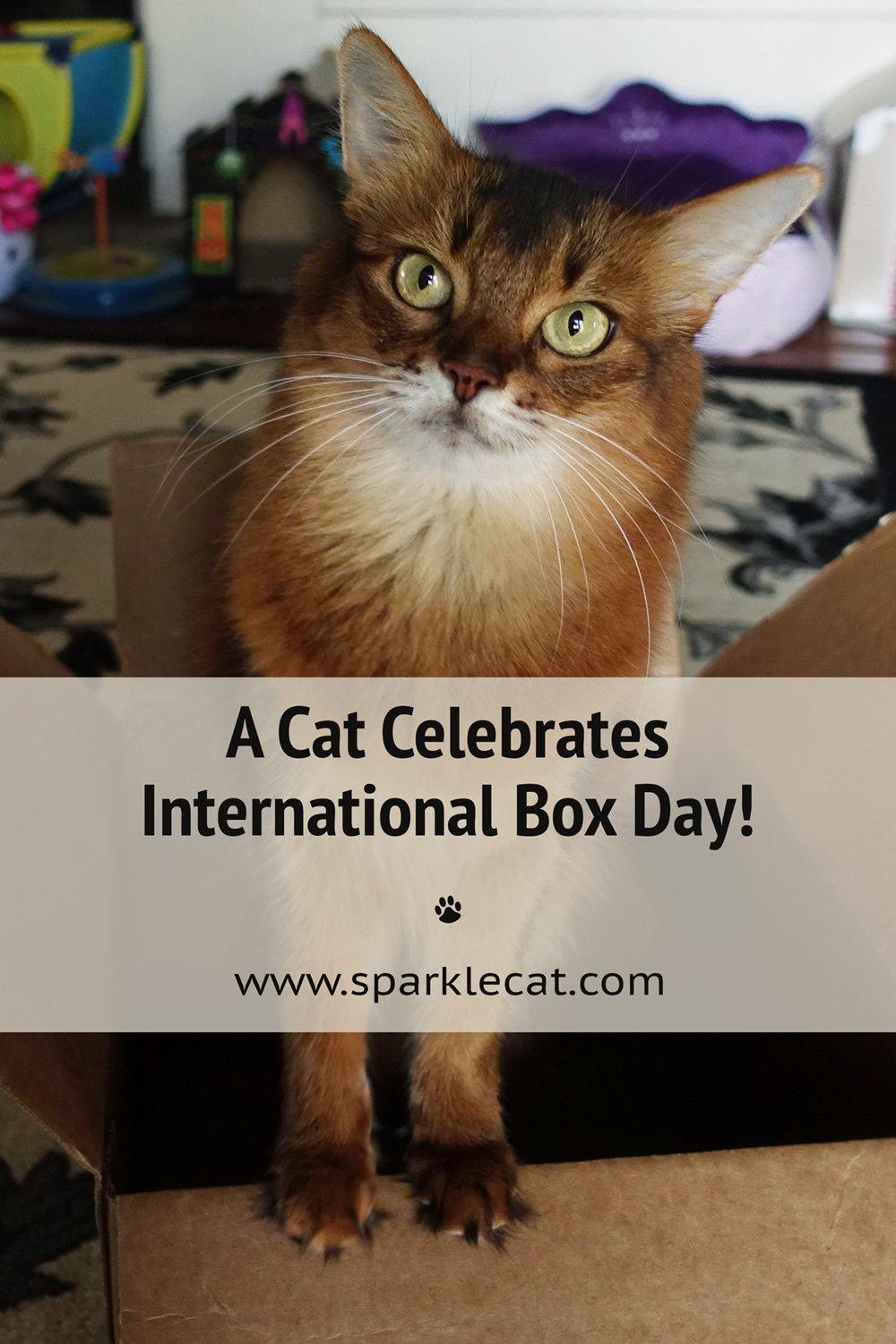 A Favorite Cat Holiday - International Box Day!