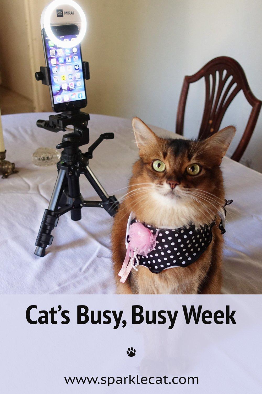 My Very Busy Week