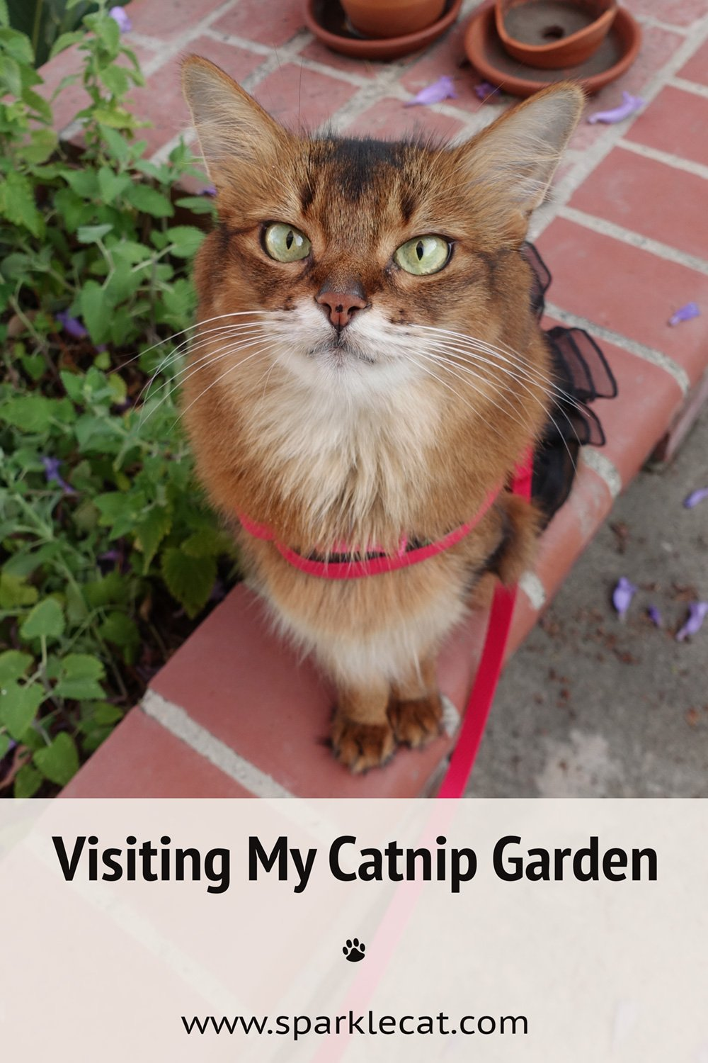 The Latest Look at My Catnip Garden(s)