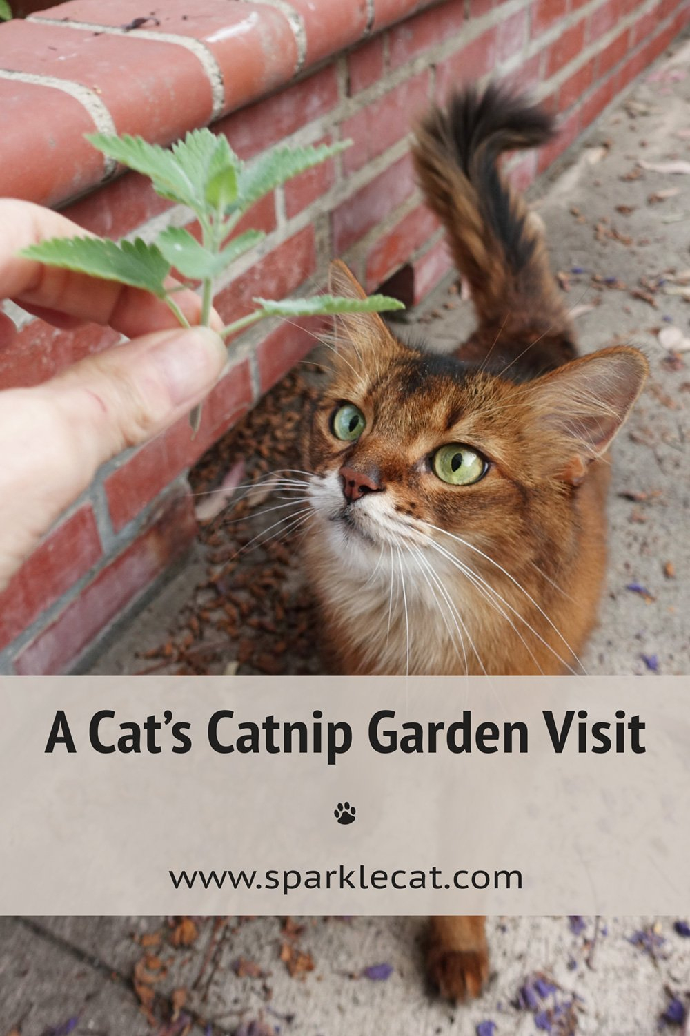 Checking Out My Catnip Garden, With Video!