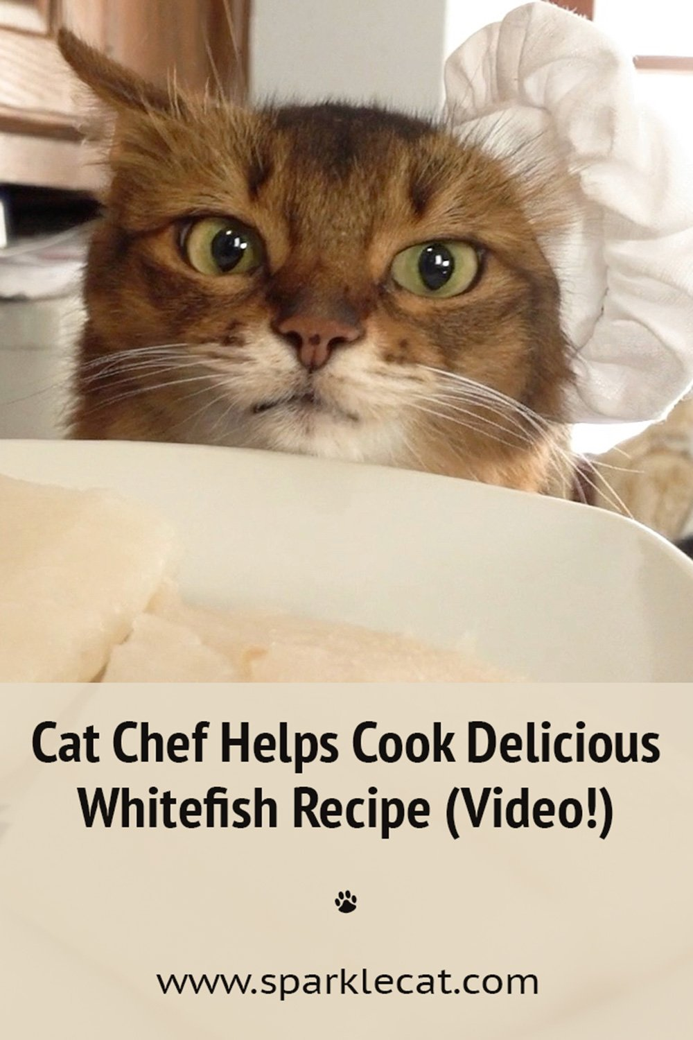 A Delicious Whitefish Recipe... Based on Fancy Feast Cat Food!