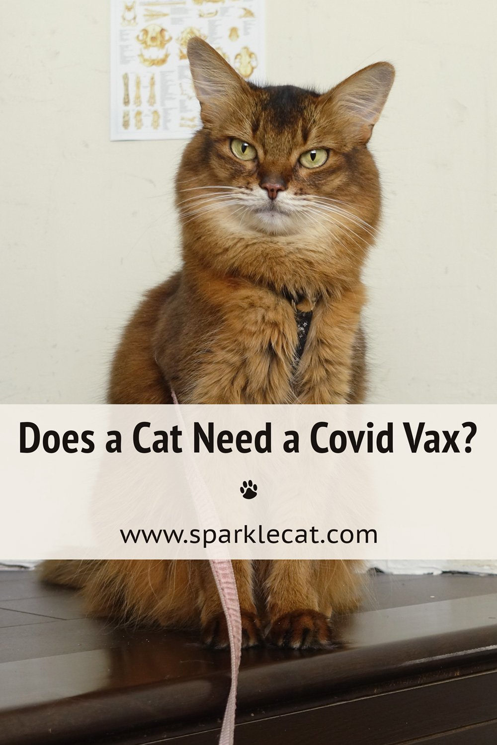 I Have to Get a Covid Vaccine!