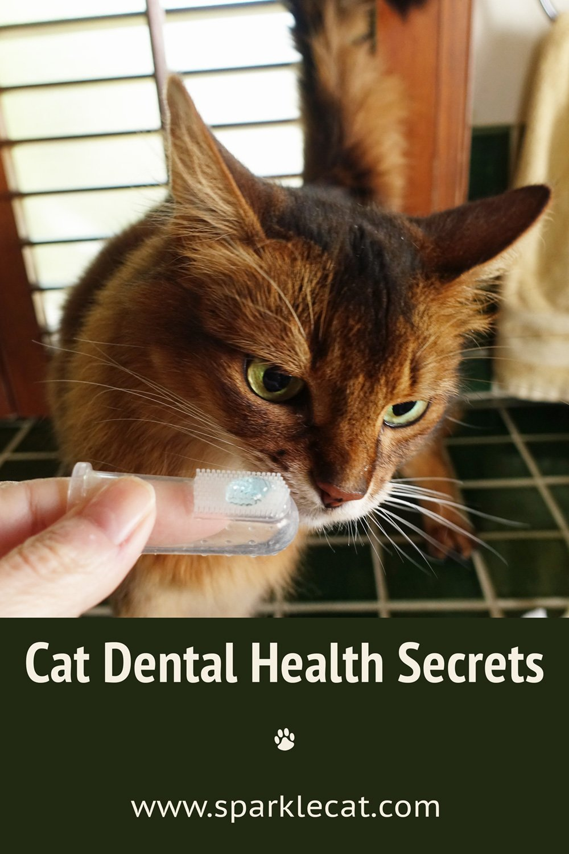 Cat Dental Health Secrets