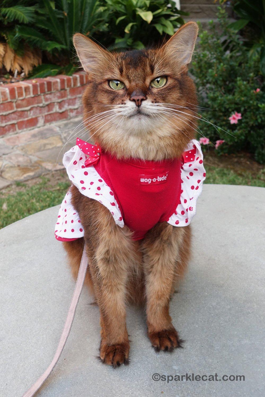 Cat Dress Cutie