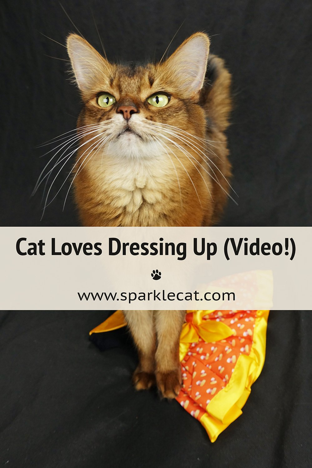 Proof That I Love Wearing Dresses (Video)