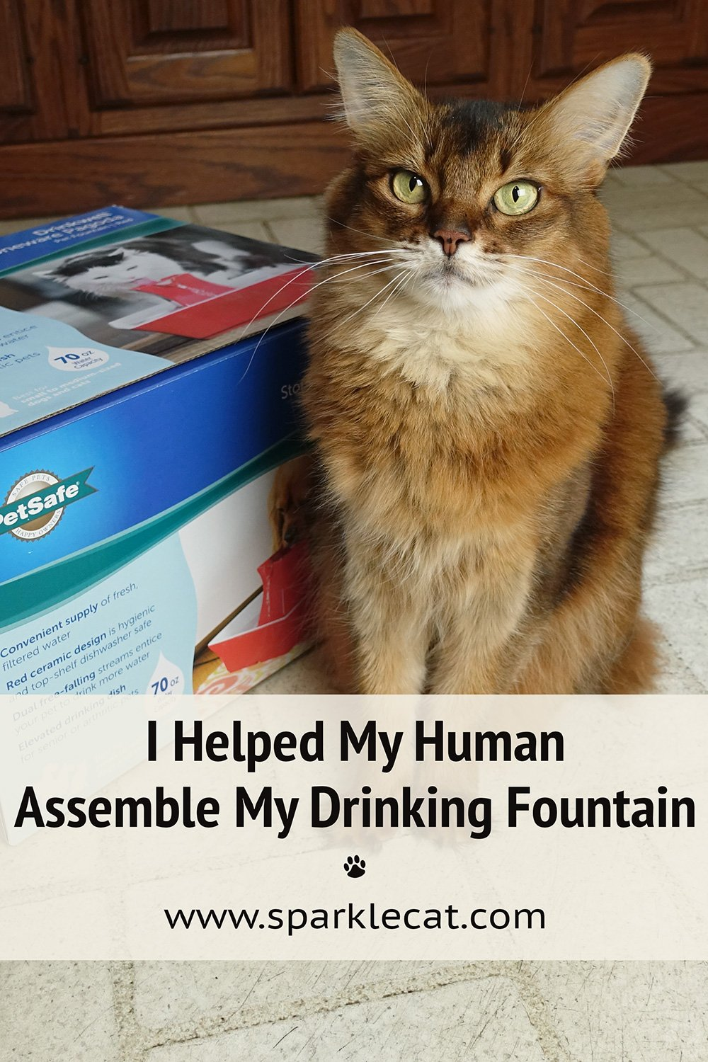 I Helped My Human Assemble My New Drinking Fountain