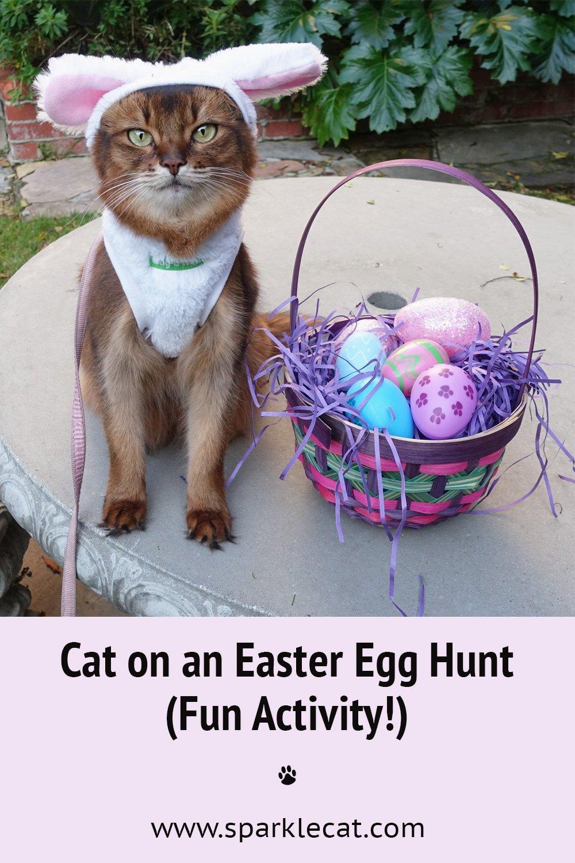 I Got to Hunt for Easter Eggs!
