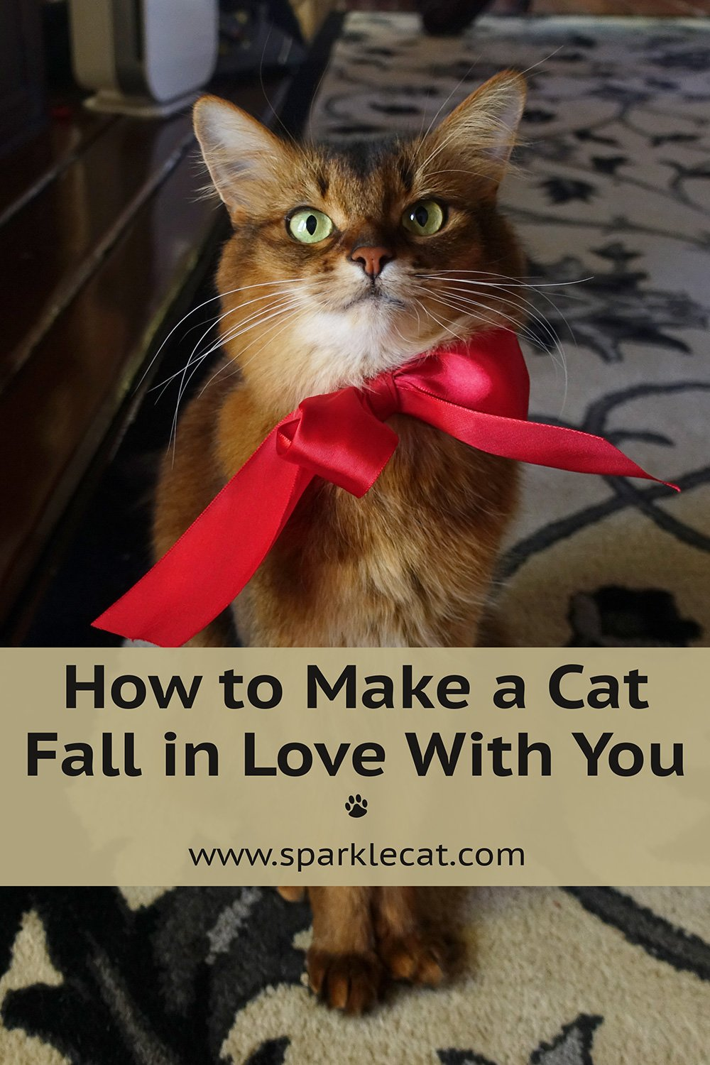 How to Make a Cat Fall in Love With You