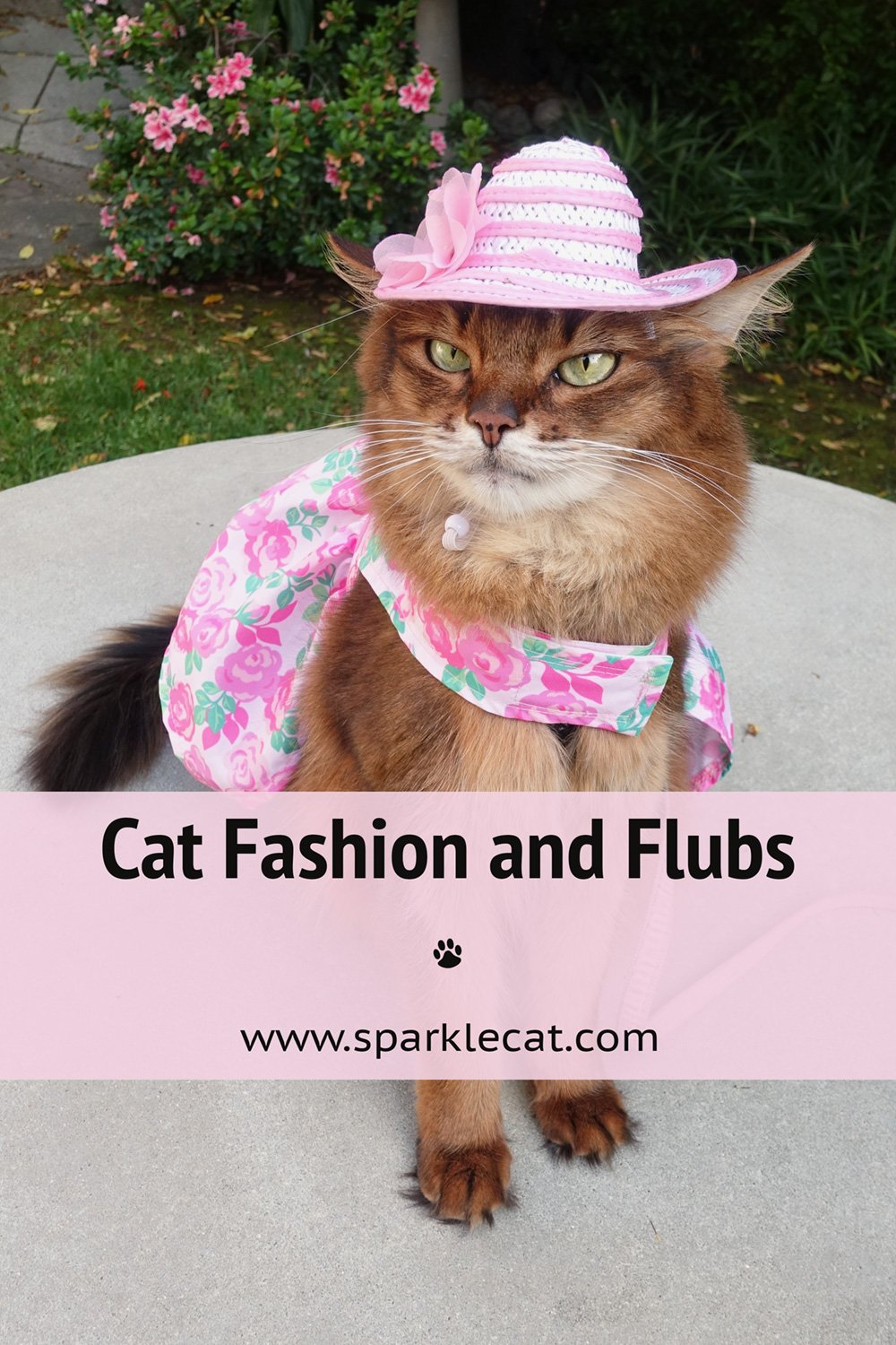 Cat Fashion and Flubs