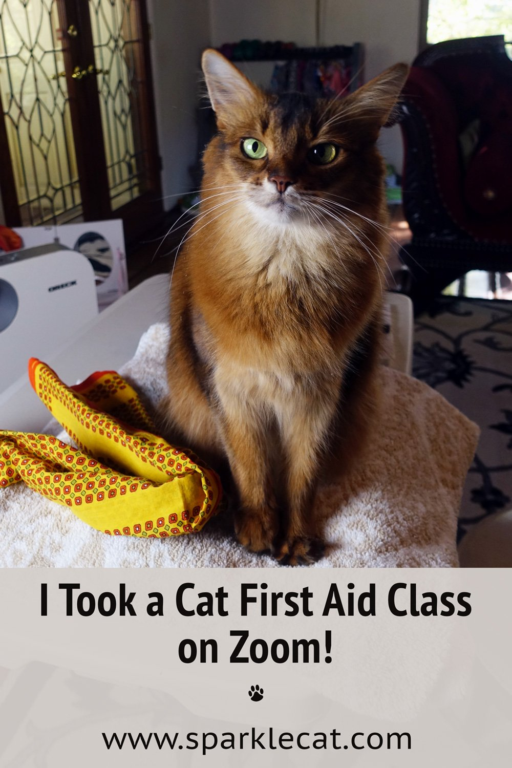 My Human and I Took a Cat First Aid Class on Zoom!