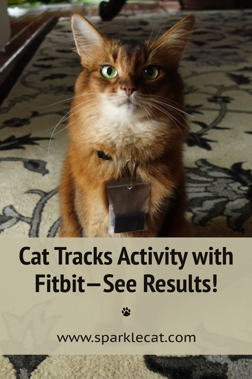 Fitbit Kitty! I Tracked My Activity - See the Results