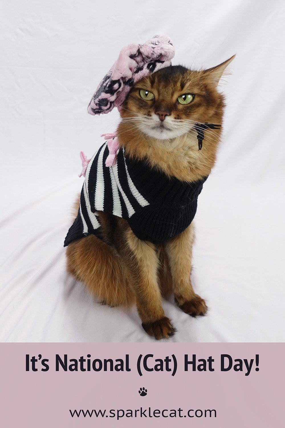 Happy National (Cat) Hat Day!
