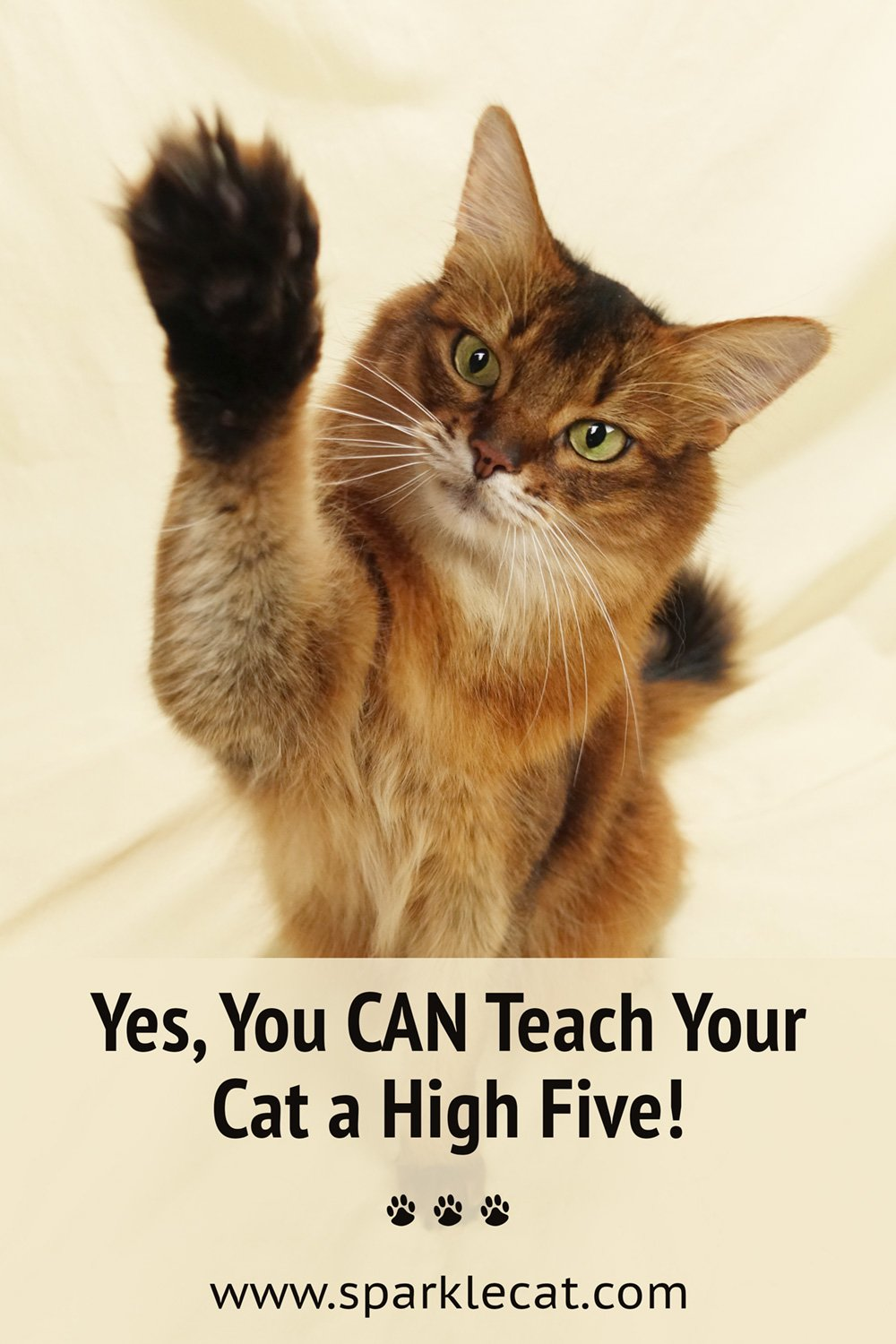 Teach Your Cat to Do a High Five!