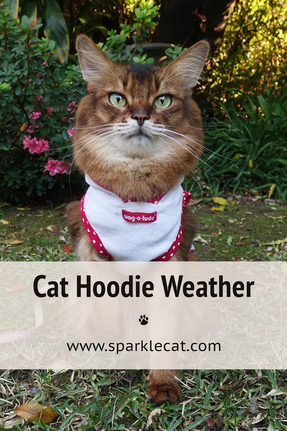 Cat Hoodie Weather