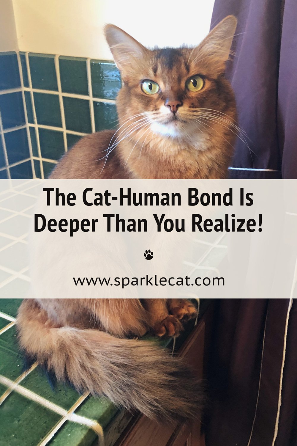 The Cat-Human Bond Is Deeper Than You May Think