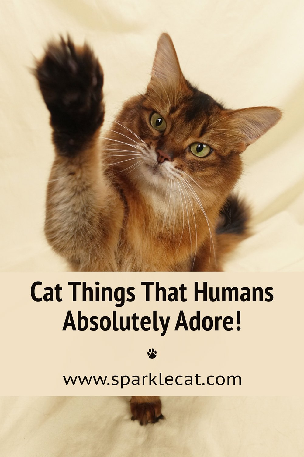 Cat Things That Are Instant Human Magnets