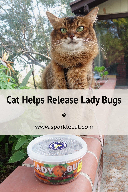 I Supervise Releasing the Ladybugs