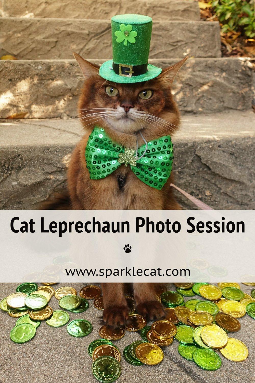 Cat Leprechaun on Location