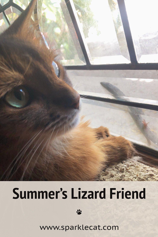 My Very Own Window Lizard Friend