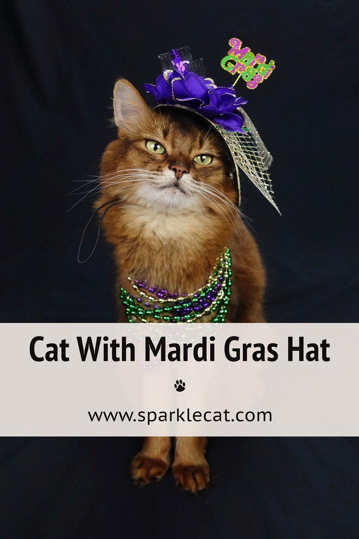 Mardi Gras Kitteh