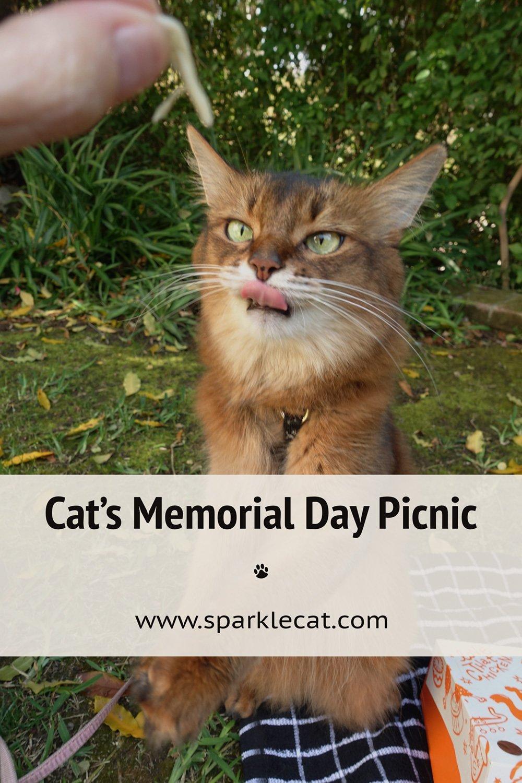 My Memorial Day Picnic