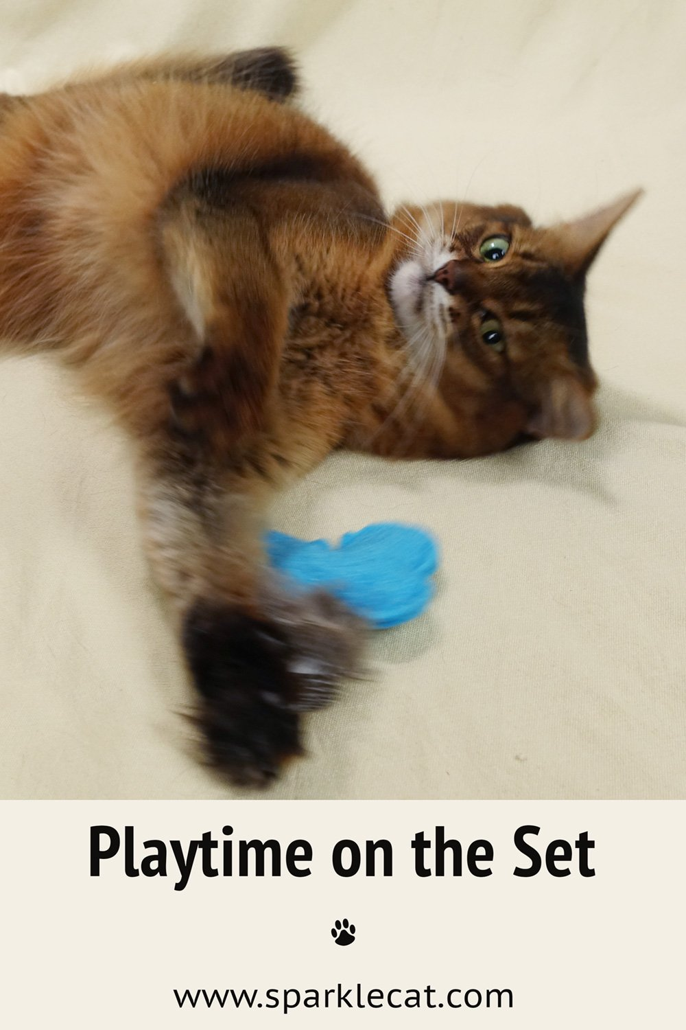 Cat Model Playtime on the Set