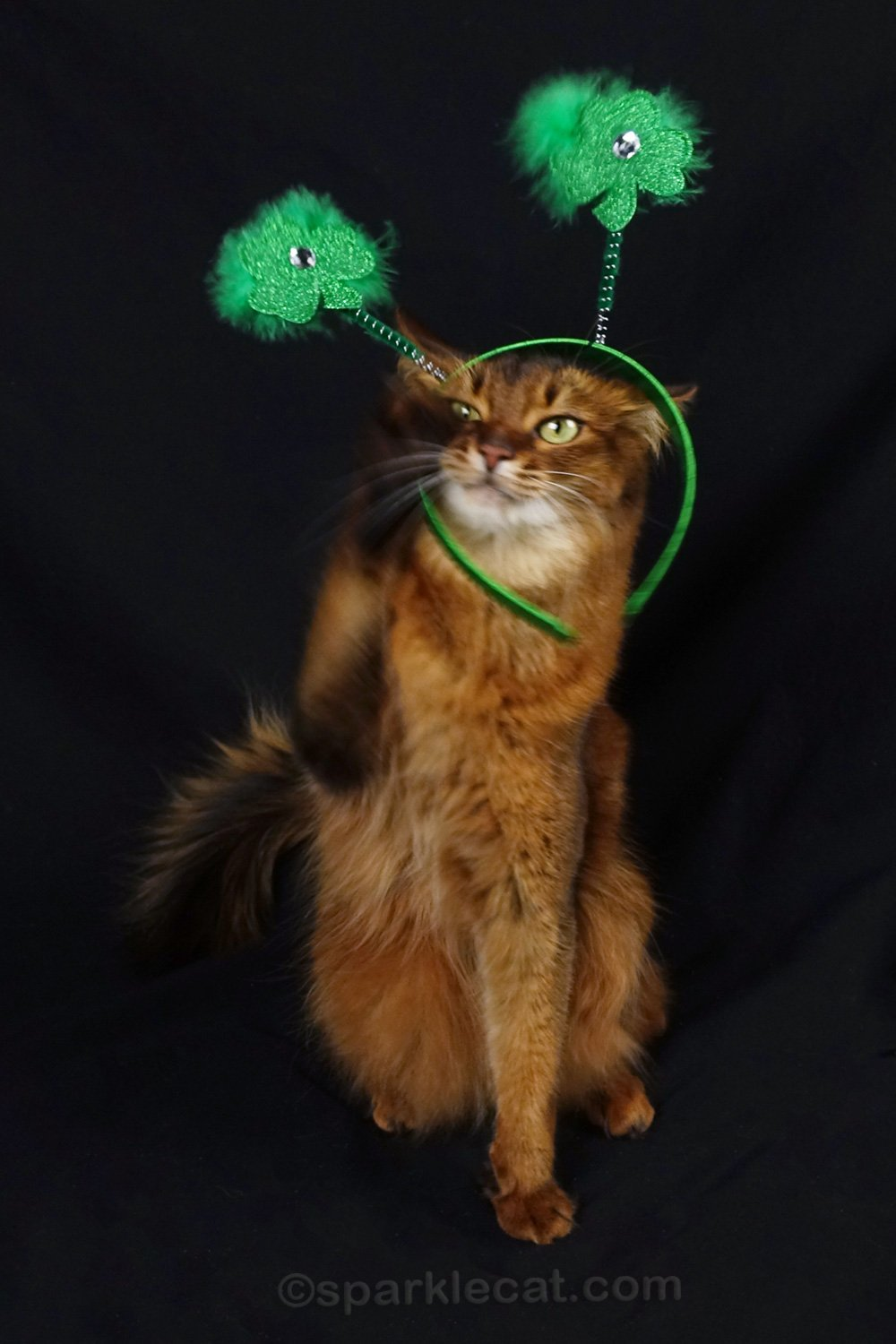 Getting Ready for St. Patrick\'s Day