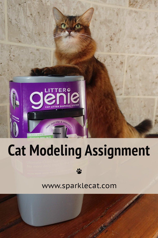 Cat Modeling Inspiration... or Something Like That