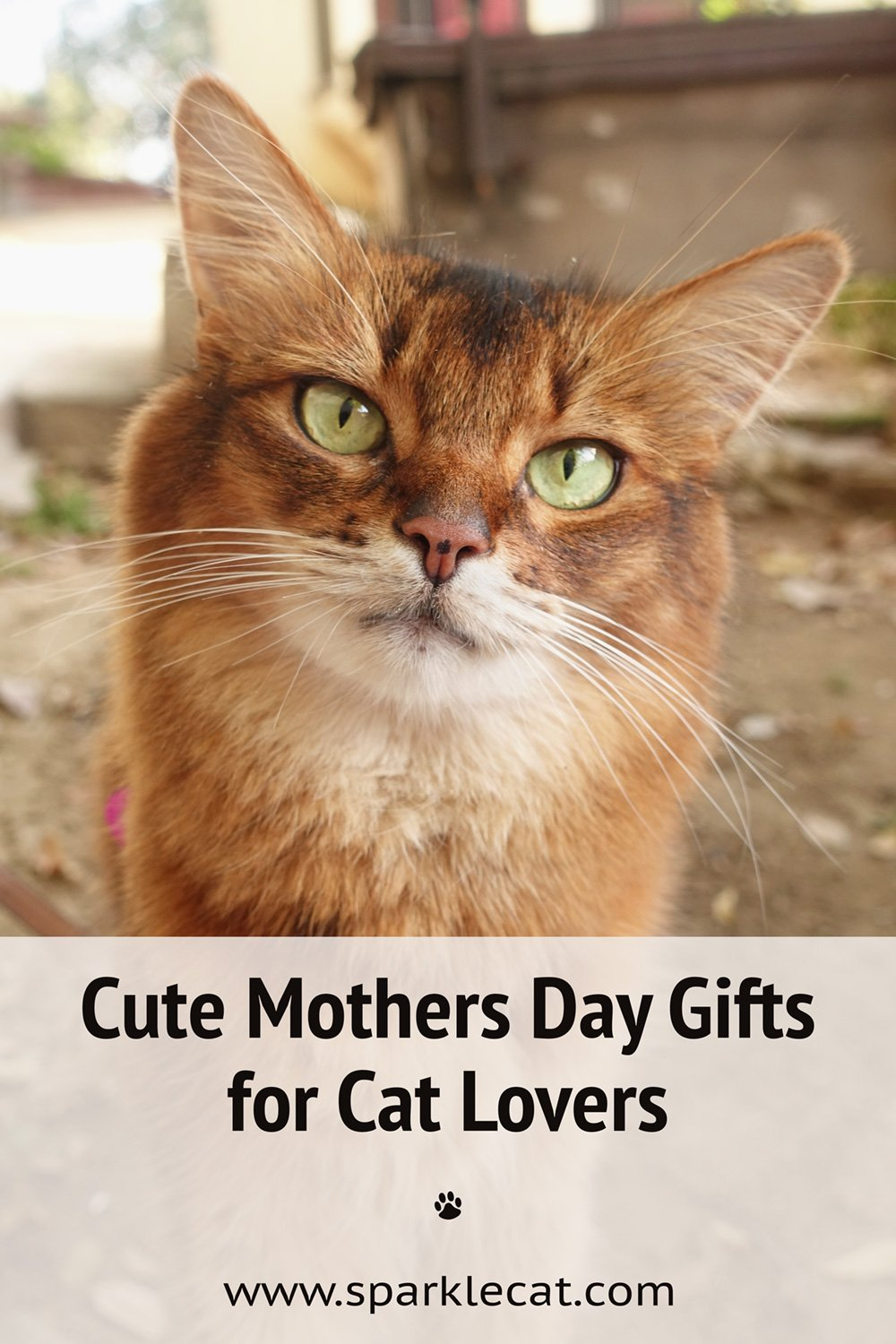 Mother\'s Day Gifts for Cat Lovers From Etsy - New for 2021!