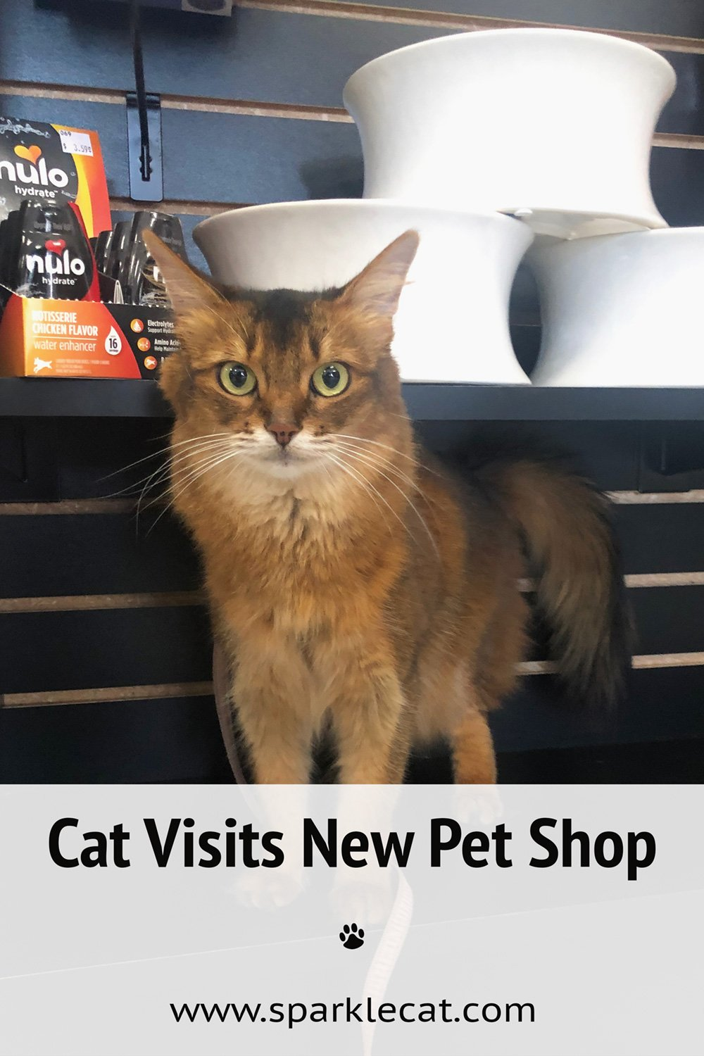 Visiting a New Pet Shop
