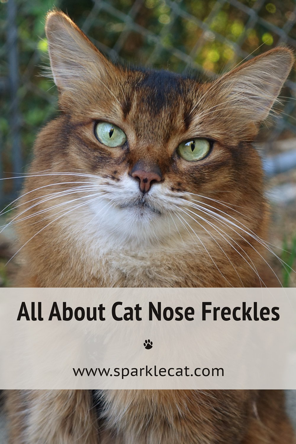 About My Nose Freckle