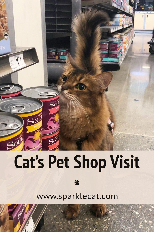 Shopping Fun at the Big Pet Store