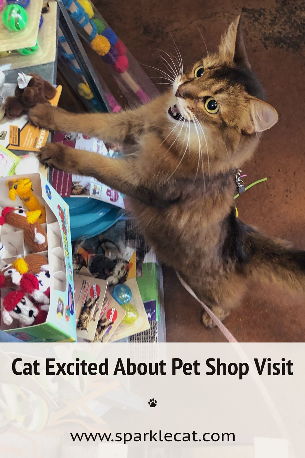My Awesome Pet Shop Visit