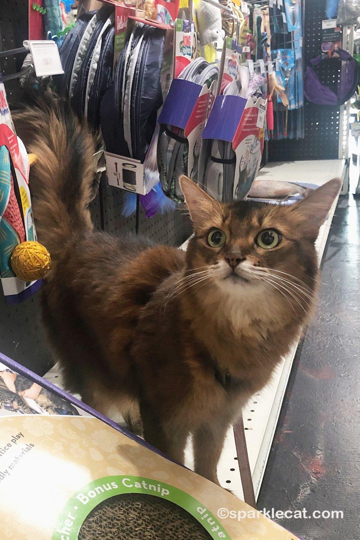 Pet Shop Browsing