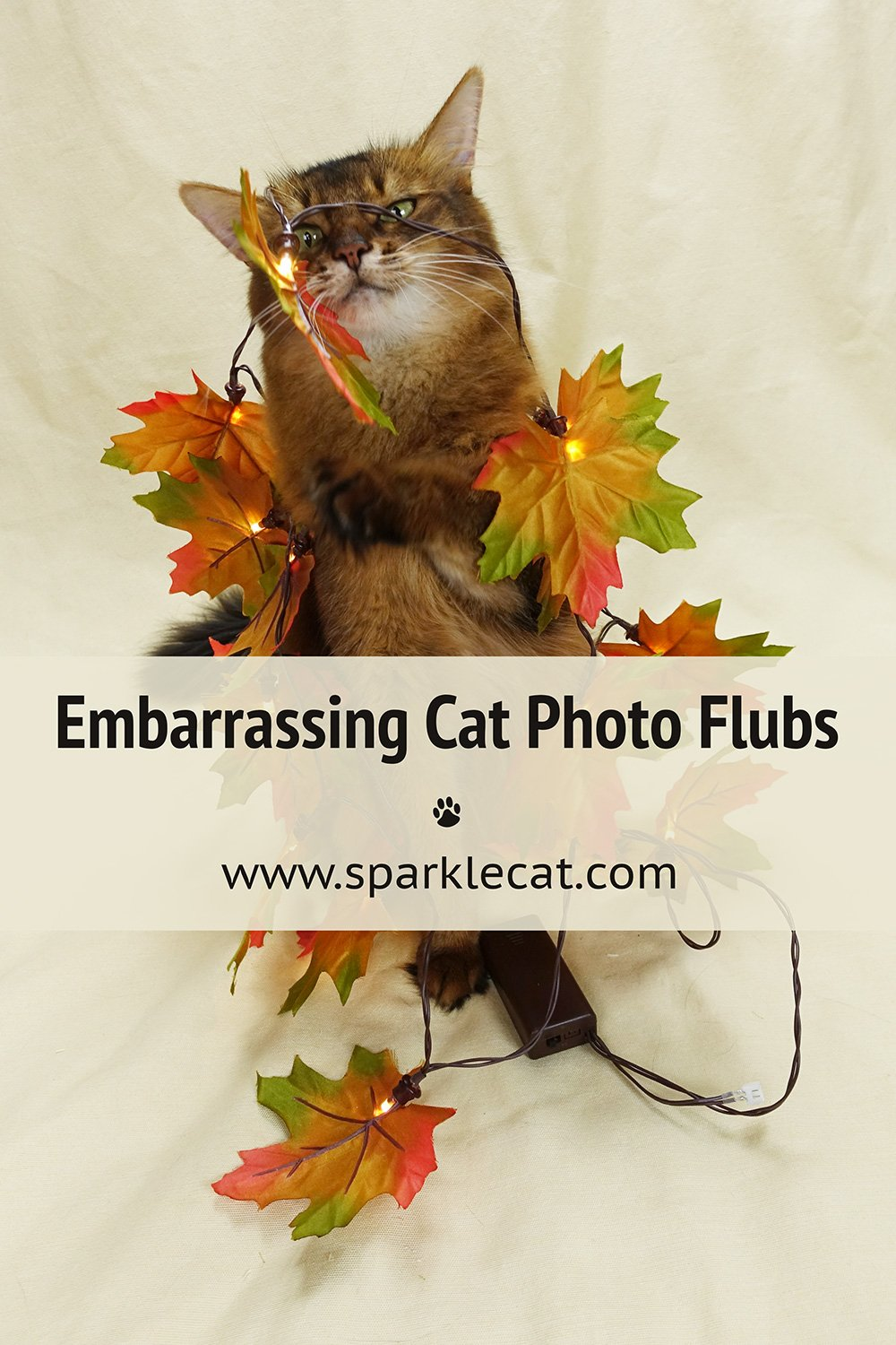 Embarrassing Photo Flubs