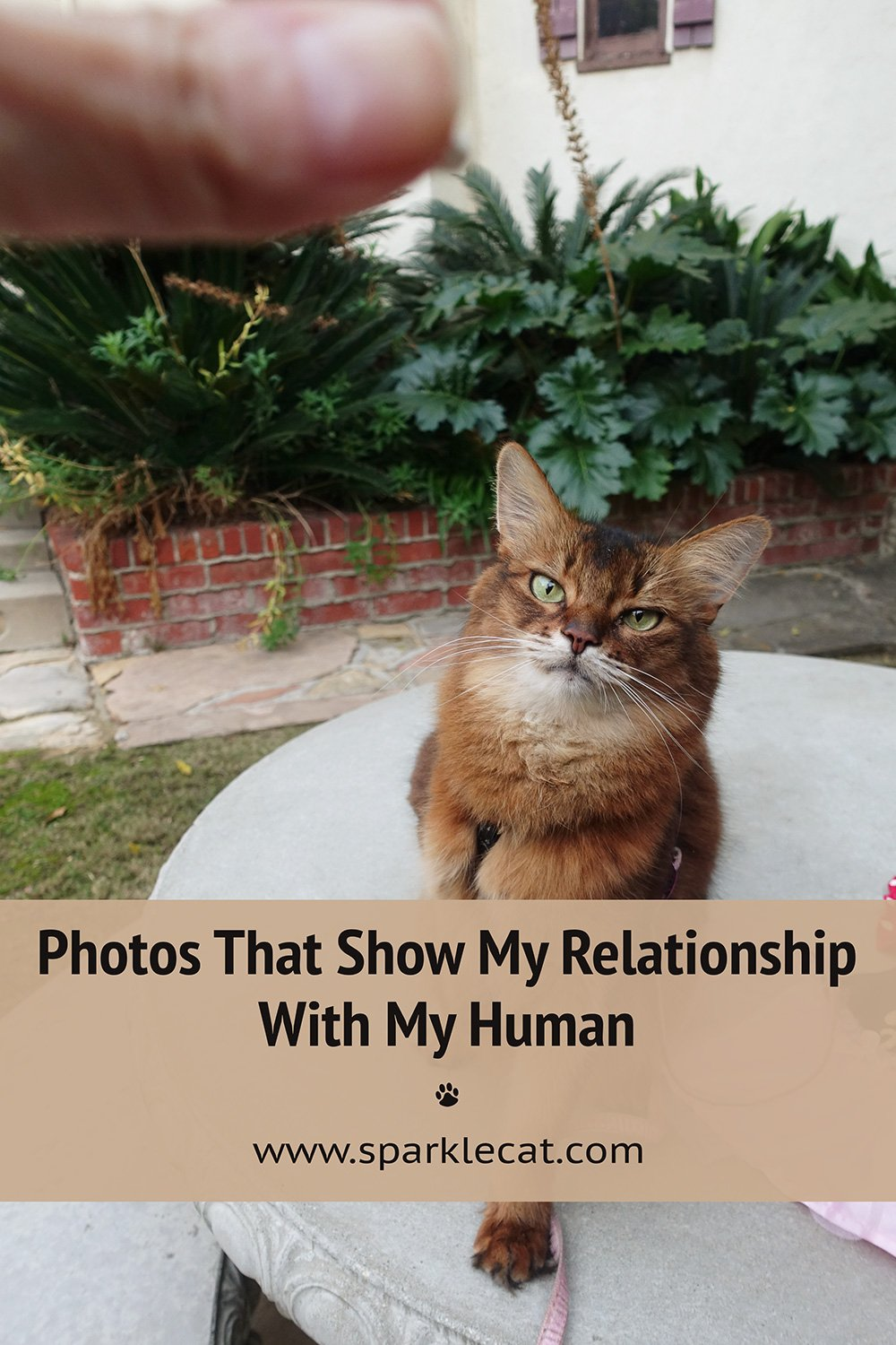 Photos That Show My Relationship With My Human