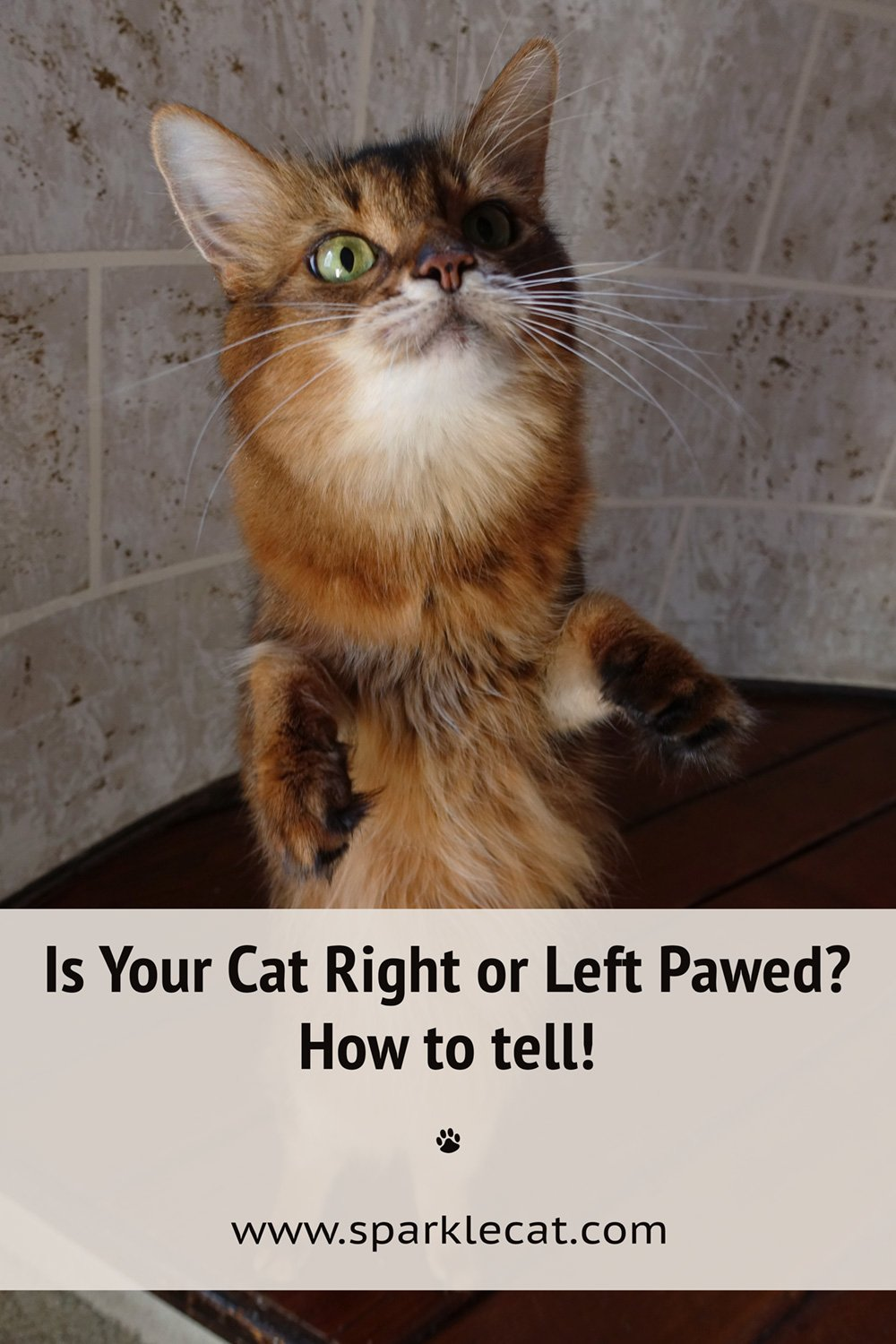 Is Your Cat Right or Left Pawed? Can You Tell Paw Preference?