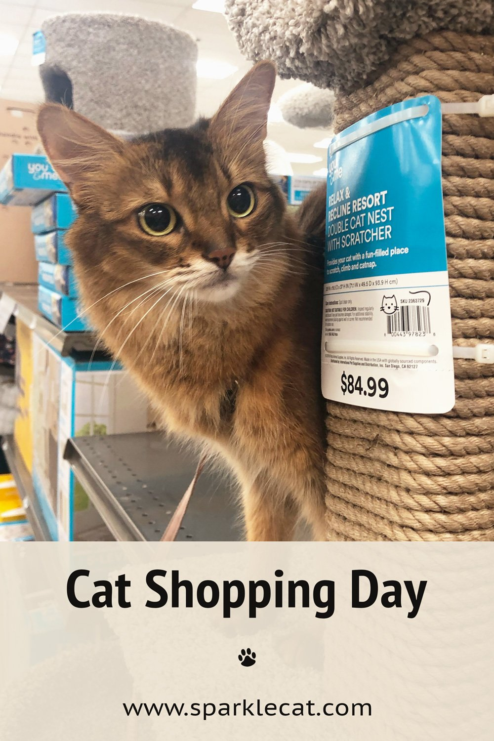 Cat Food Shopping and Browsing