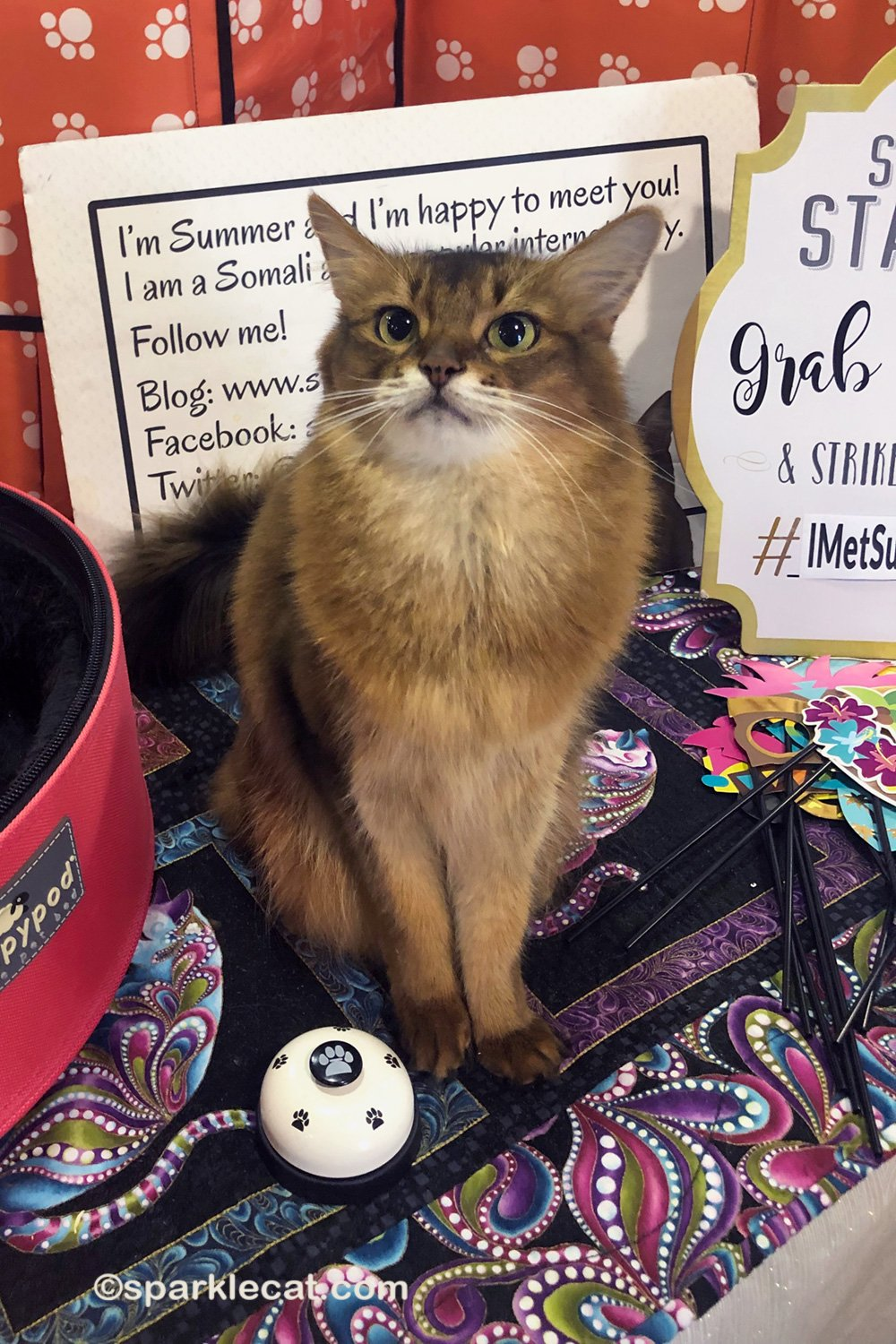 What Are Cat Shows Anyway? I Answer Some Questions