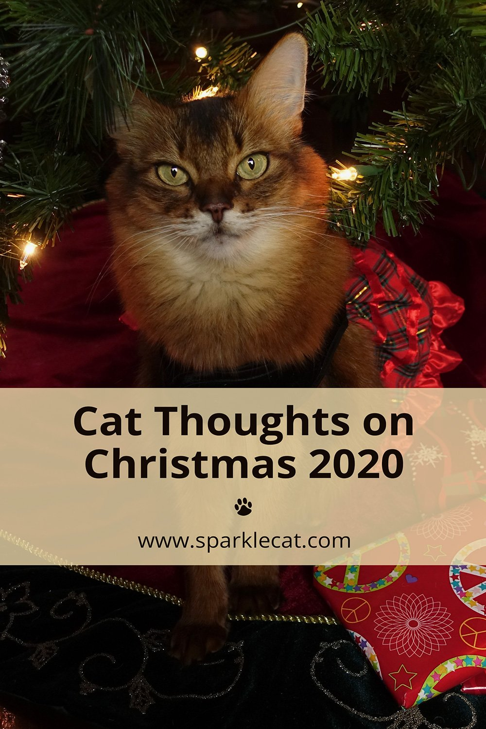 Cat Thoughts on Christmas 2020