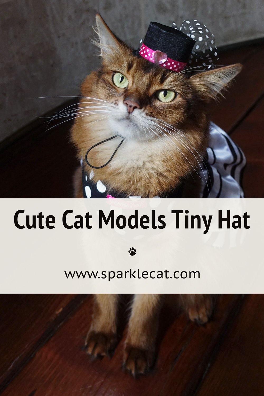 My New Tiny Hat