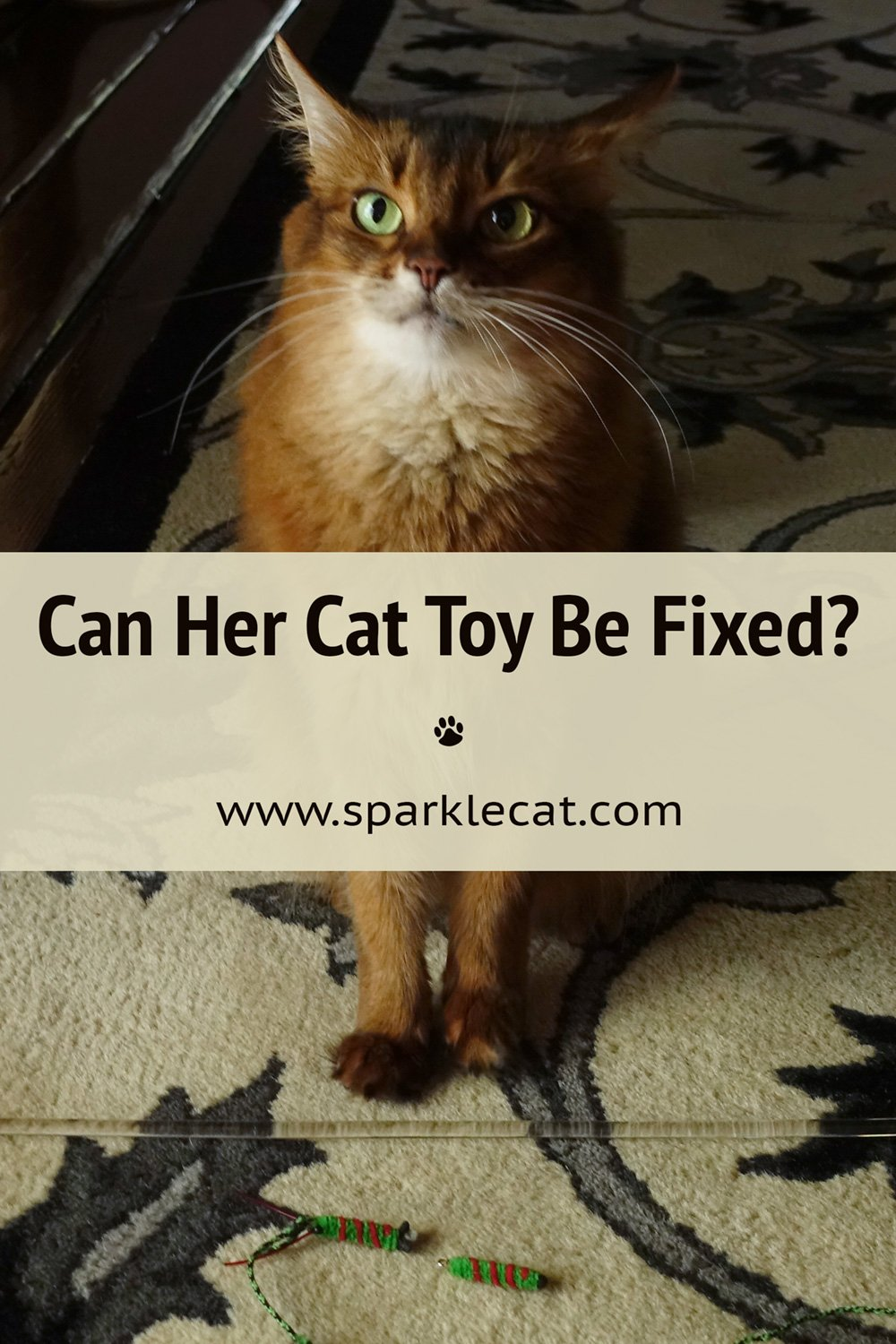 Can My Cattipeed Cat Toy Be Fixed?